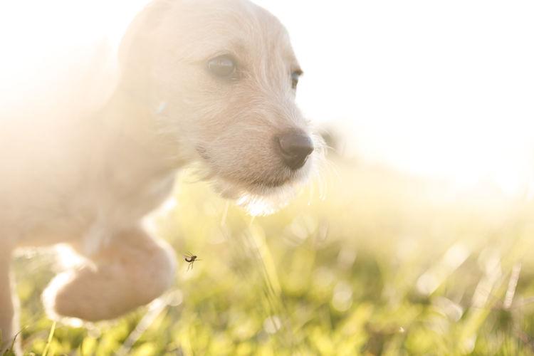 犬の舌炎「原因」②【舌の傷・外傷】