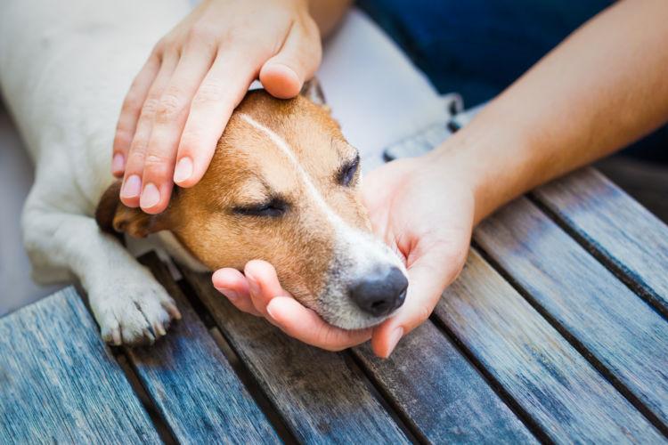 犬の口の色がヘン・変色【まとめ】