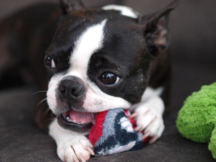 犬の外歯瘻(がいしろう)【まとめ】