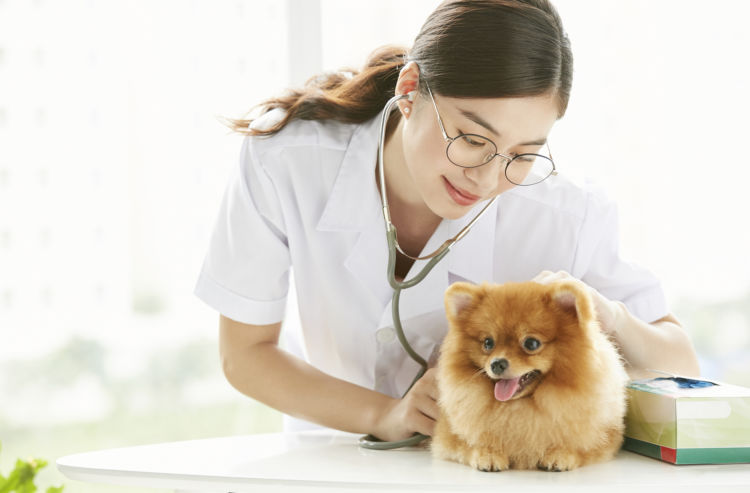 愛犬 便秘 動物病院 受診