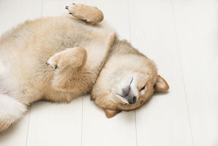 犬の便秘の改善に役立つ食べ物【まとめ】