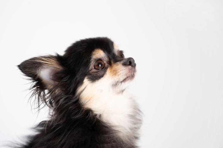 犬が注意すべき結石の種類は?