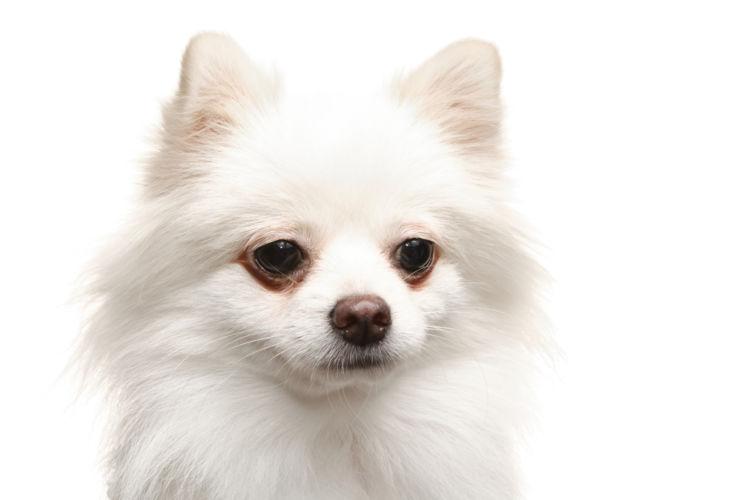 【子犬・老犬】がシナモンを食べても大丈夫?