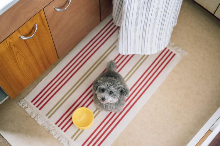 犬にしめじを与える際の【適量】は?