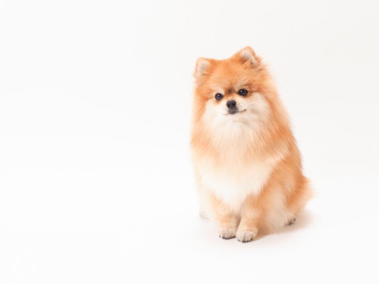 【子犬・老犬】がしらすを食べても大丈夫?
