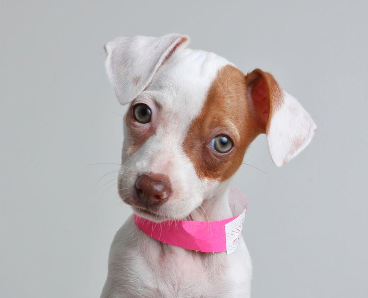 犬の内耳炎【まとめ】