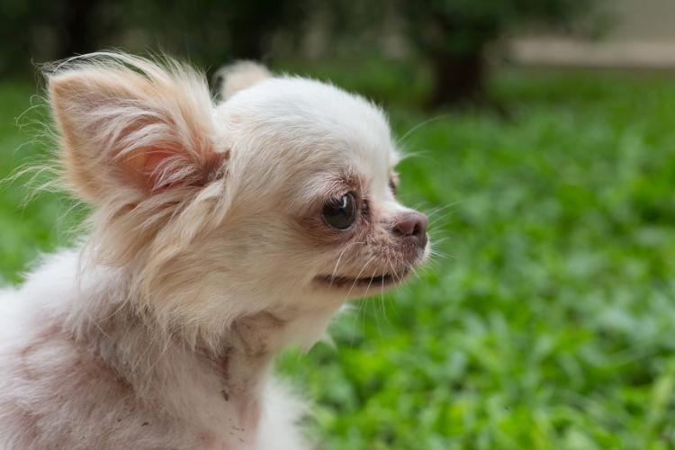 犬 脊髄空洞症 首