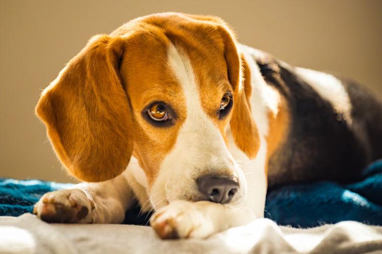 【よくある誤解②】犬に牛乳を与えると【アレルギー】になる可能性がある?