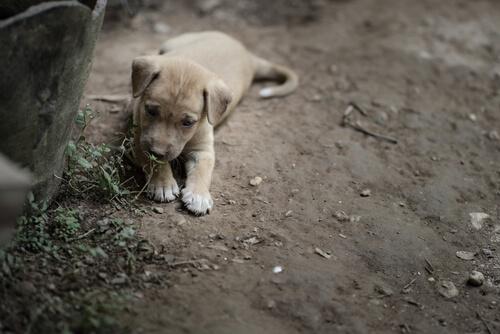 犬の便秘を解消する市販薬はあるの?