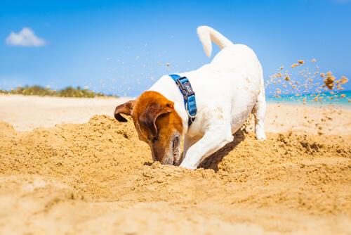 ちょっと、やめて!犬がベッドでがりがりと穴掘りを始める理由とは?