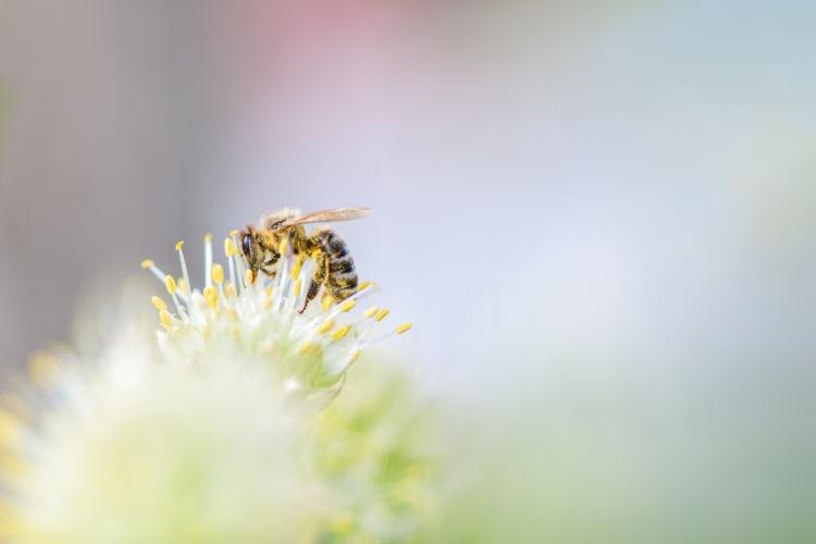 草を食べる際の注意点②【昆虫】