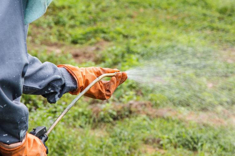 草を食べる際の注意点③【除草剤(農薬)・駆虫剤】