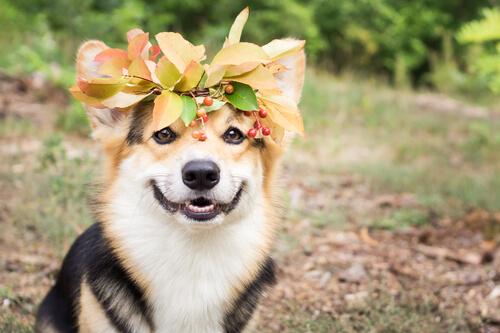 【長生きの秘訣】愛犬家が知っておきたい犬の手作りご飯の基本ルール