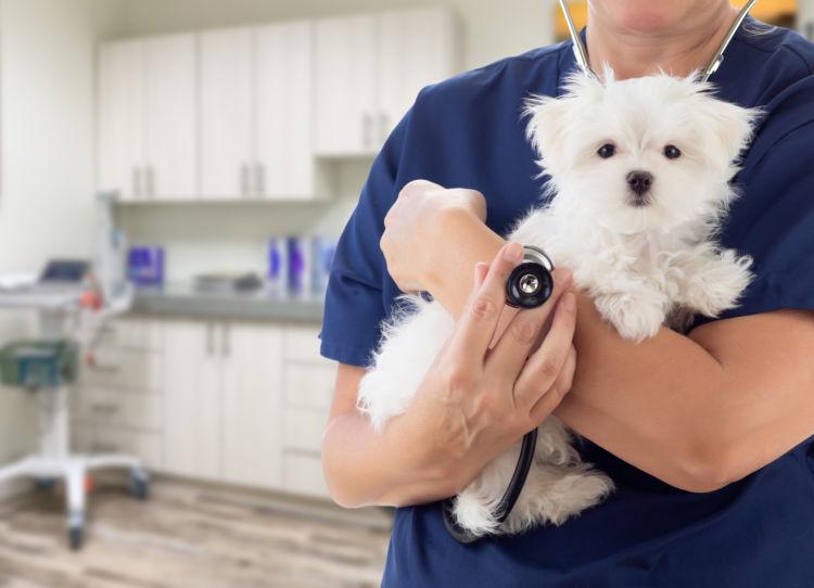 犬 動物病院 相談