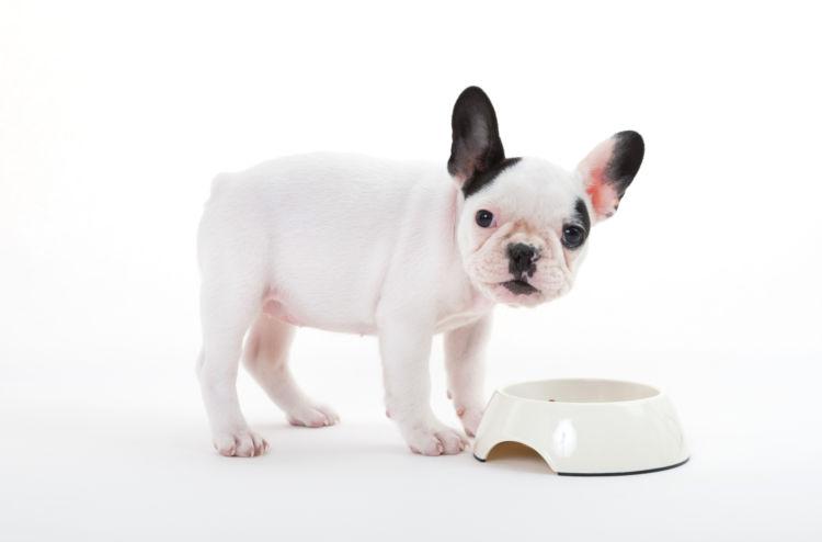老犬や子犬に必要なタンパク質の適量は?