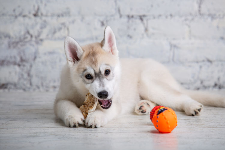 犬に与えるタンパク質、過剰や不足に注意!