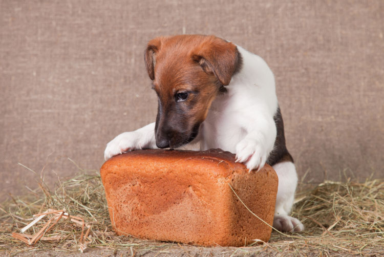 子犬や老犬に必要な炭水化物の適量は?