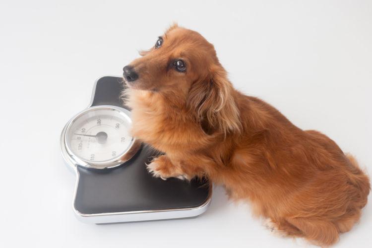 犬に炭水化物を与える場合の注意点(手作り・サプリ)!