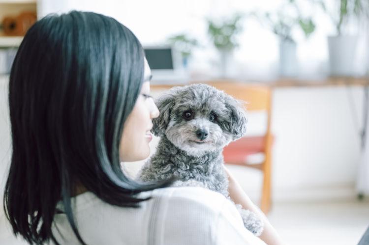 犬に与える「餅(もち)」のまとめ