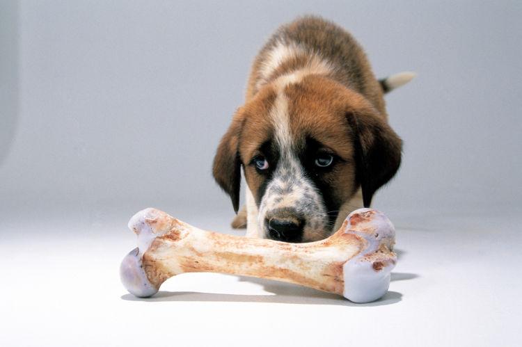 犬にカルシウムは必要?