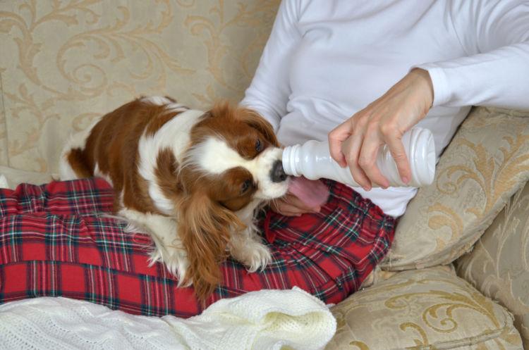 犬にカルシウムを与える際のおすすめの食材やおやつは?
