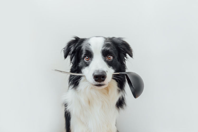 【獣医師監修】犬に手作りご飯を与えても大丈夫?子犬・成犬・老犬に食べさせる際のポイントや注意点!