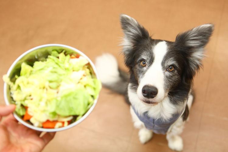 【獣医師監修】犬に食物繊維は必要?1日に必要な量は?子犬や老犬、おやつや手作り食などの注意点!