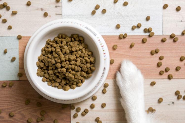 犬に与える食物繊維、1日に必要な量は?