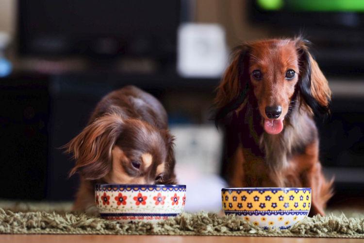 犬に与える食物繊維のまとめ