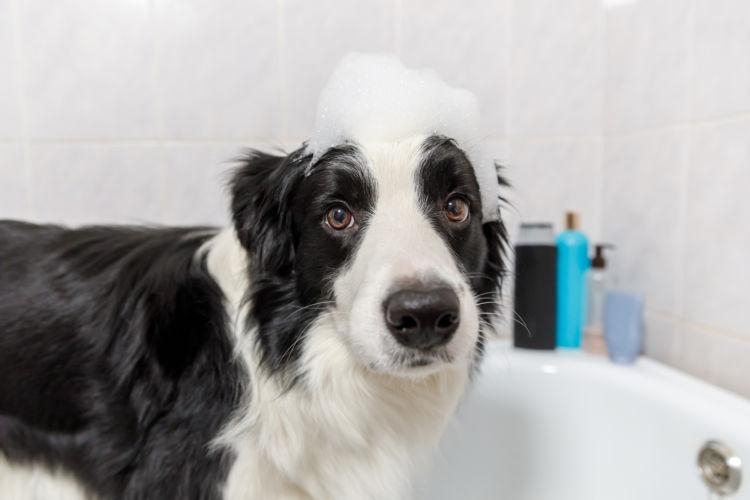 犬にシャンプーは必要?頻度は?(毎日、週一など)