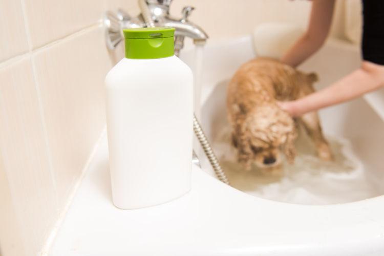 犬のシャンプー選びのポイント・注意点①【薬用シャンプー】