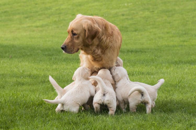 犬に与えるカルシウム【過不足に注意!】