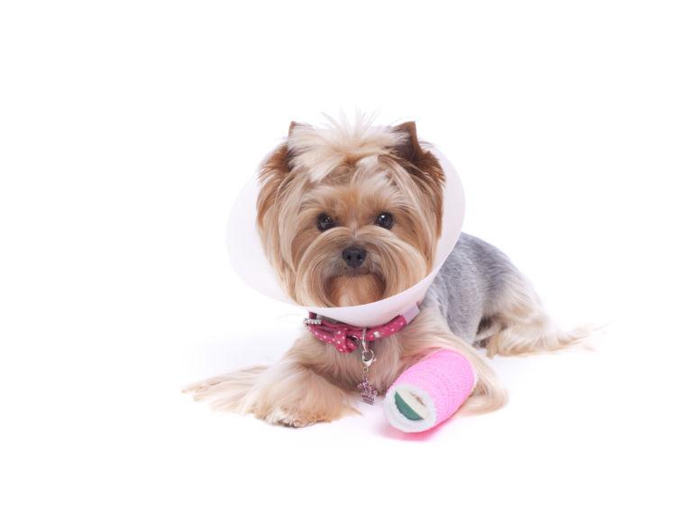 犬 カルシウム不足 骨折