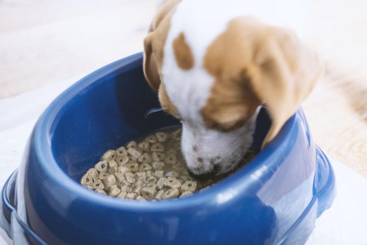 犬 ドッグフード 主食