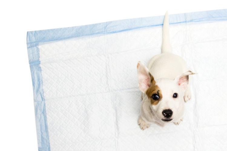 犬 腎臓 排泄