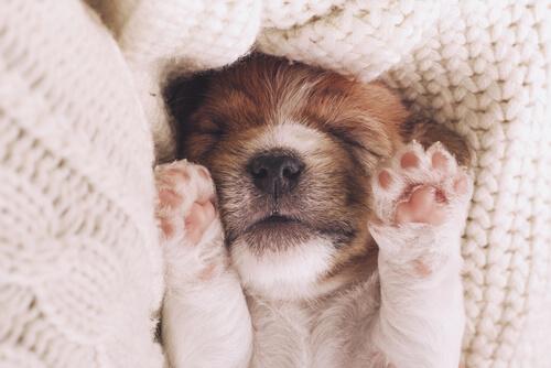 犬があなたに寄り添って眠ろうとしてくる、たった2つの理由