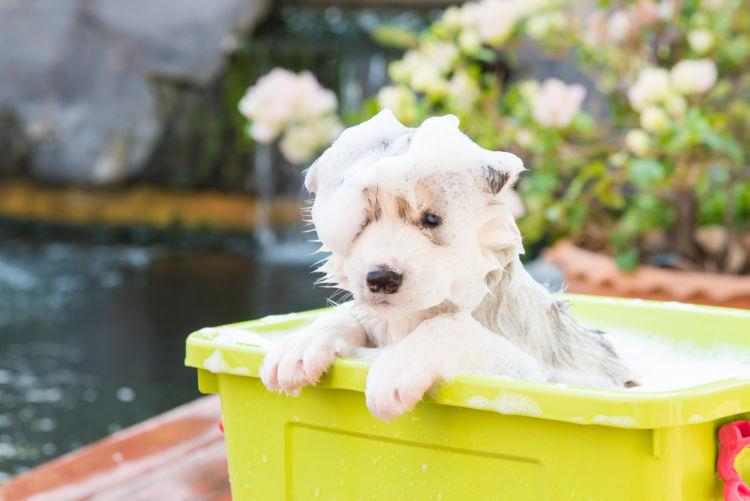 犬のシャンプーの注意点・ポイント②【目や耳にシャンプーが入らないように】
