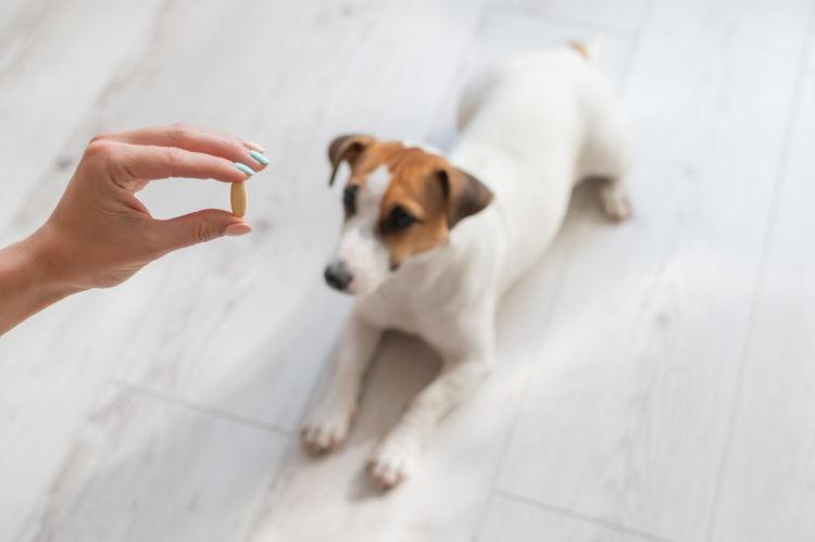犬にビタミン剤(人間用)を与えても良い?