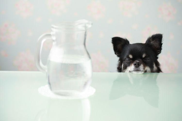 犬にミネラルウォーターを飲ませても大丈夫?