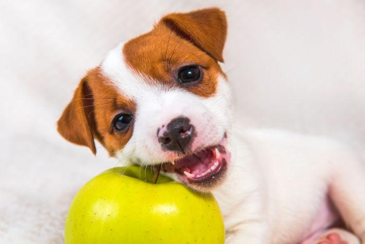 子犬のビタミンの適量