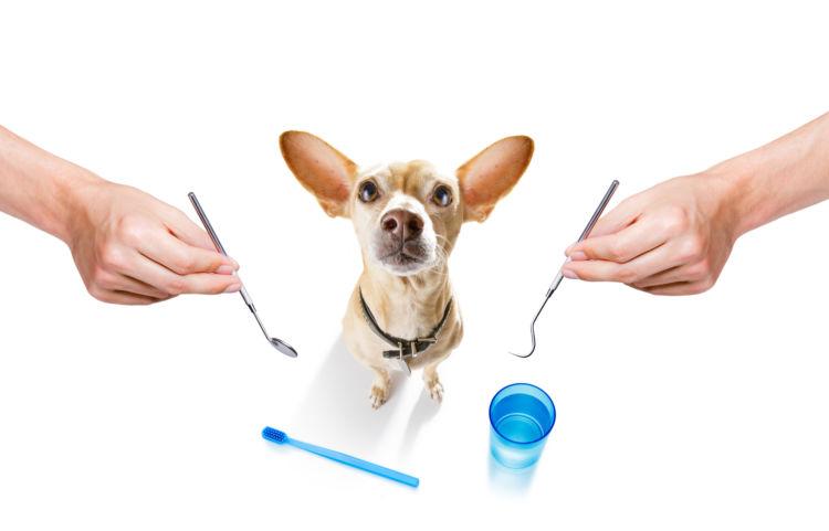 犬の虫歯(う蝕)【症状(初期)・兆候】