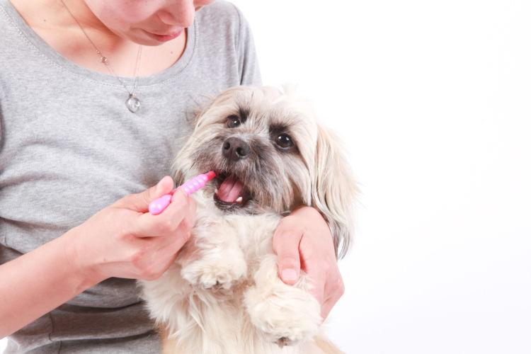 犬の歯磨き【歯磨きの仕方やコツ、注意点!】