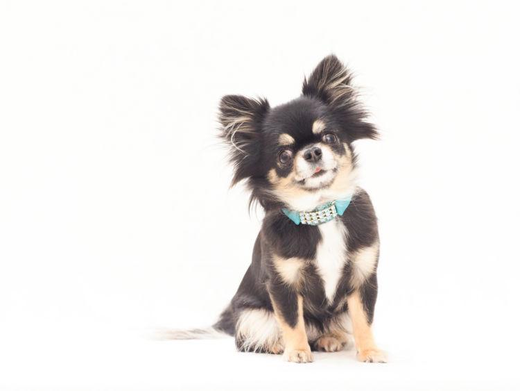 犬の歯磨き【人間用の歯ブラシや歯磨き粉の使用はOK?】