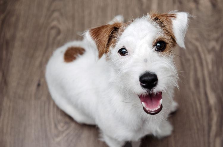 【獣医師監修】犬の歯磨きは不要?いつから必要?頻度や歯磨きのコツ、使用道具、嫌がる場合の対処法は?