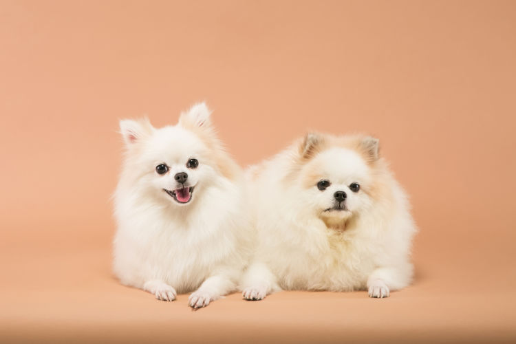 子犬・老犬の歯磨き【注意点・ケア方法は?】