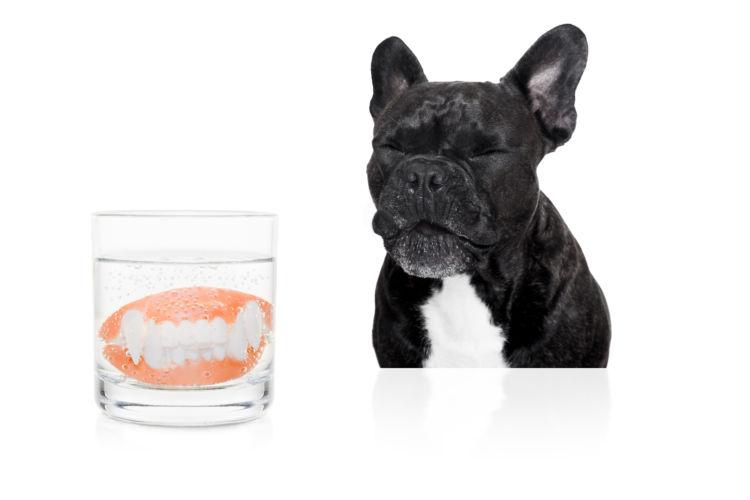 犬の歯石取り(除去)【ペット保険の適用は?】