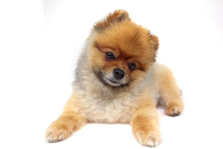 犬の歯【歯垢・歯石とは?】