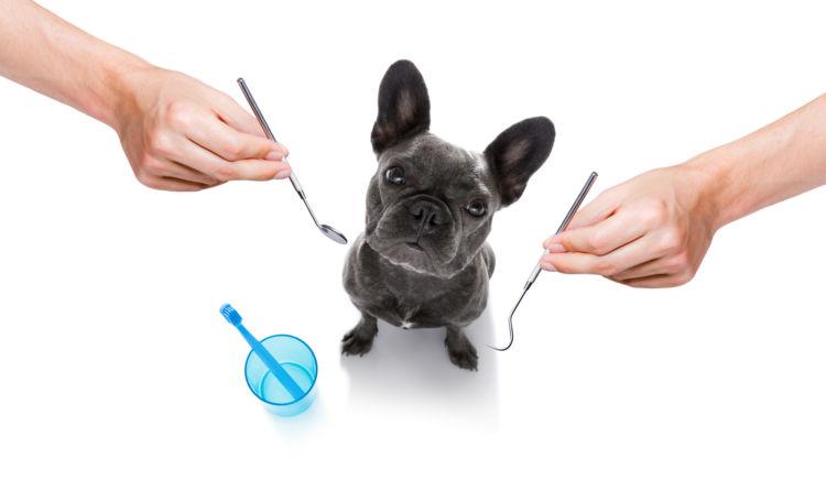 犬の歯【注意すべき歯の病気(歯周病など)や症状は?】