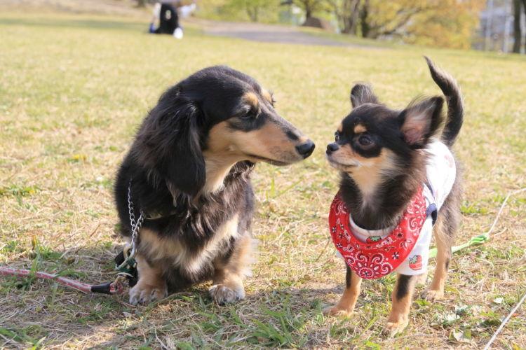 犬の歯【犬種別の歯の注意点やポイント!】
