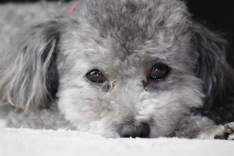 虫歯の症状②【犬の様子】